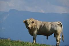 13. balade animale au Pays du Vuache photo Dom Ernst (4)