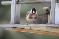 14. balade animale au Pays du Vuache photo Dom Ernst (7)