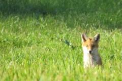 17. balade animale au Pays du Vuache photo Dom Ernst (15)