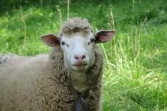 3. balade animale au Pays du Vuache photo Dom Ernst (13)