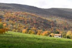 automne vuache 4
