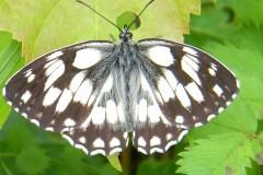 papillons 014