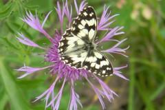 papillons 015
